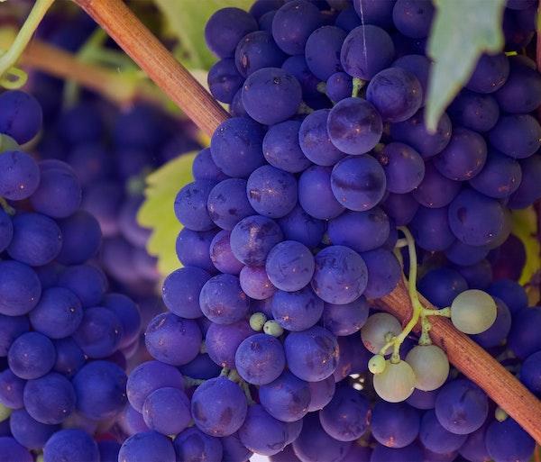 Comunicare il vino online: un corso per vedere il calice mezzo pieno