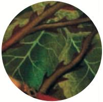 Le spine sullo sfondo potrebbero riferirsi al dolore, ma le foglie verdi suggeriscono una ricrescita