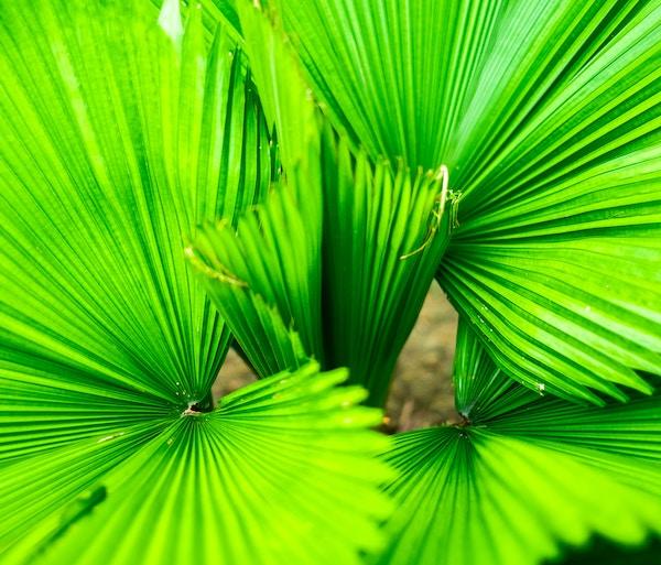 Fotografare per Instagram: in aula dopo Papua
