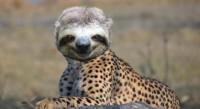 Da bradipo a ghepardo
