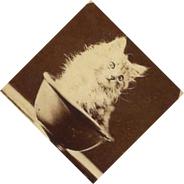 gattino ruotato