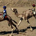 Il robot cammelliere contro lo sfruttamento