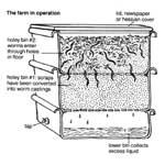 Saranno i lombrichi la soluzione all'effetto serra?