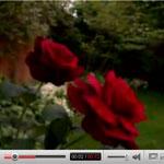Rose e spine nel futuro del social networking