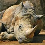 Autorevolezza e rinoceronti scorrevoli