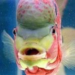 Tutti i pesci di Google