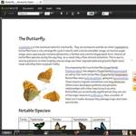 Adobe e la collaborazione online