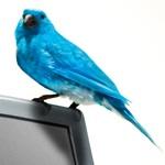 L'uccellino che uccide i blog