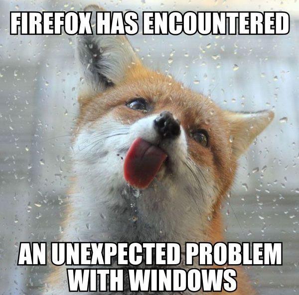 Una volpe lecca una finestra bagnata e resta incollata per la lingua.