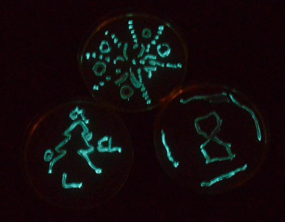 Batteri fluorescenti
