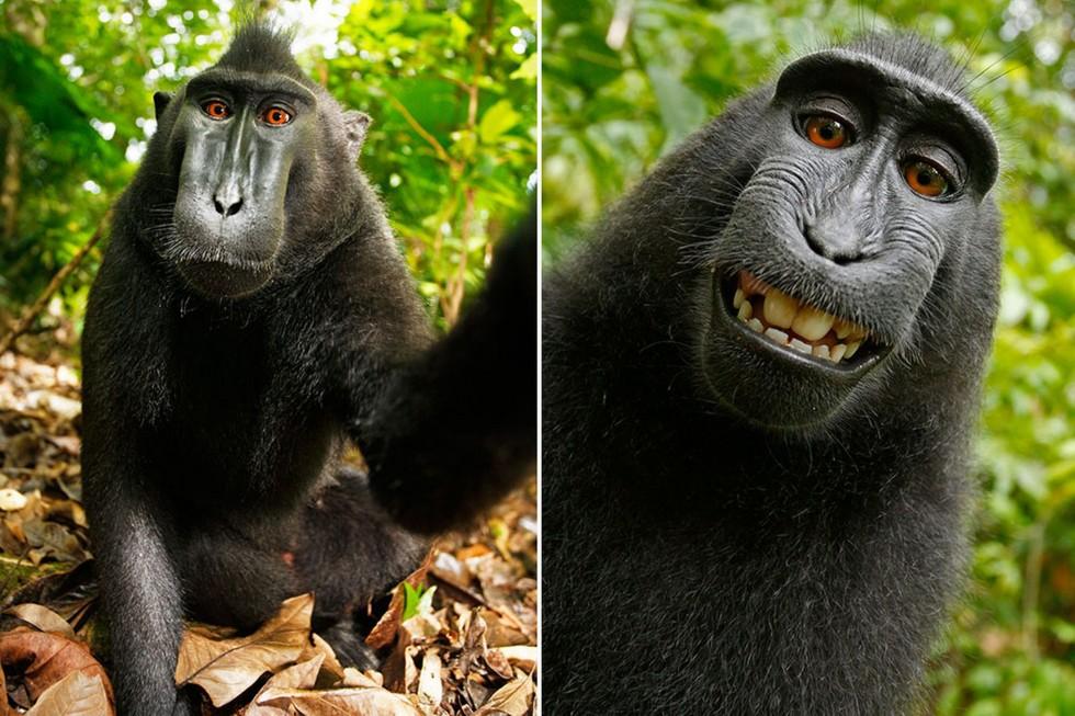 Selfie scimmieschi